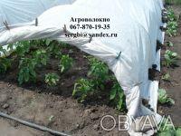 Агроволокно Агротекс 30 г/м² (1,6м*10м) пакетированное. Киев. фото 1