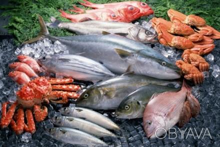 Рыба, морепродукты оптом и в розницу -рыба для переработки -рыба столовых сорт. Днепр, Днепропетровская область. фото 1