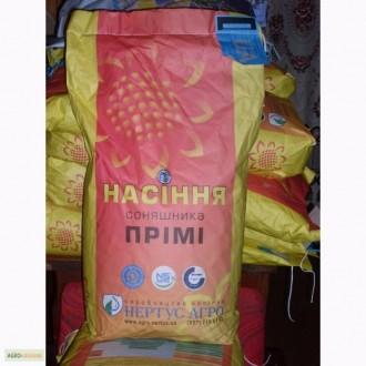 Семена подсолнечника стойкого до евролайтинга. Первомайск. фото 1