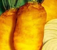 Семена кормового буряка БРИГАДИР. Ровно. фото 1