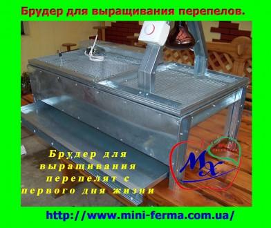 Брудер для выращивания суточных перепелов.. Харьков. фото 1