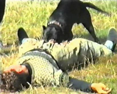 Дрессировка собак. Киев. фото 1