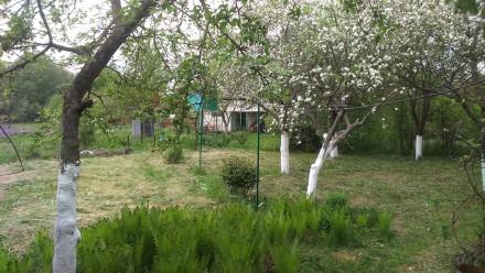 Продам дачу в с. Матеевка, Бахмачского района, Черниговской области недалеко от . Матеевка, Черниговская область. фото 5
