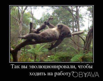 SEO поисковое органическое продвижение сайта, органическое продвижение – это ком. Киев, Киевская область. фото 1