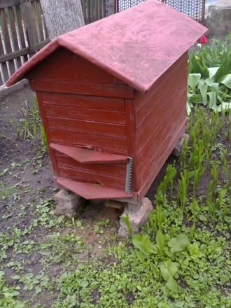 Продам бджоли, бджолосім'ї карпатські пчелы пчелосемьи. Бердичев. фото 1