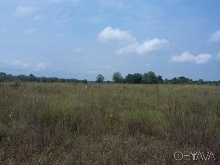 Продам пять участков земли по 12 соток в живописном месте в селе Боромыки Черниг. Чернигов. фото 1