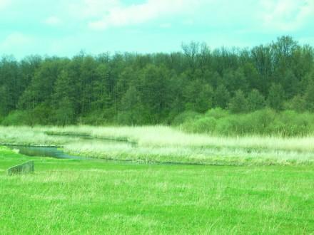 Ви хочете побудувати свій будинок в тихому затишному місці над річкою поруч з лі. Стрижавка, Вінницька область. фото 8