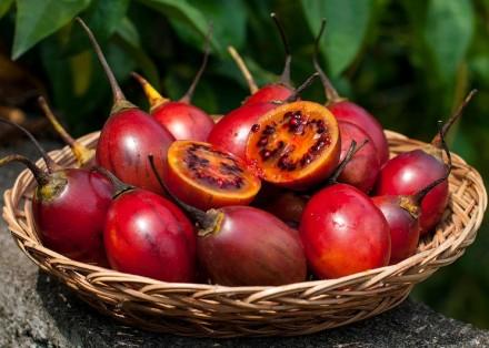 Цифомандра, томарилло, помидорное дерево.. Лохвица. фото 1
