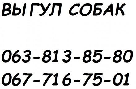 ВЫГУЛ СОБАК. ОДЕССА.. Одесса. фото 1
