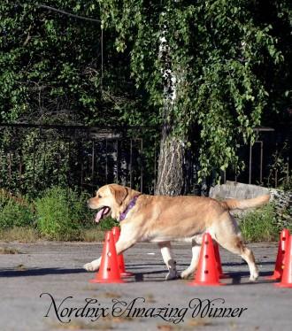 Передержка собак (гостиница). Харьков. фото 1