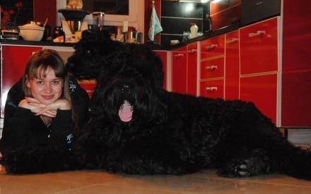 Русский черный терьер - Высокопородные щенки. Донецк. фото 1