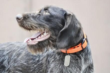 Самый надёжный Адресник, Жетончик, Бирка для собак,. Киев. фото 1
