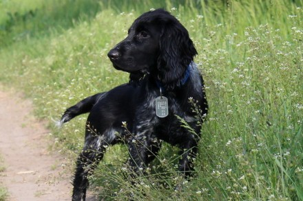 Что делать что бы пёс не потерялся!??!. Киев. фото 1
