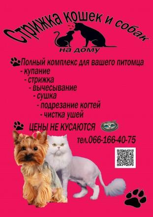 Стрижка кошек и собак на дому. Киев. фото 1