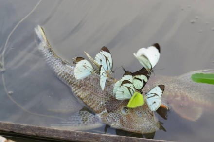 Обслуживание аквариумов. Днепр. фото 1