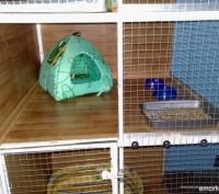 Гостиница для животных «Мадагаскар». Харьков. фото 1
